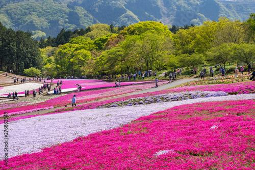 Poster Rose 芝桜が満開の羊山公園の風景