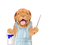 Funny Dog In Blue Overalls With  Paint Bucket And Pointing Stick. Isolated On White Background