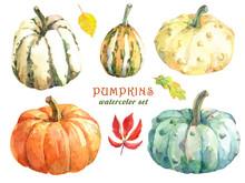 Different Varieties Of Pumpkins. Hand Drawn Watercolor Illustration.