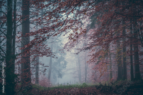 Poster Crimson Magic autumn forest, romantic, misty, foggy landscape