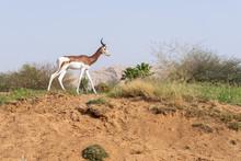 A Critically Endagered Sahara ...