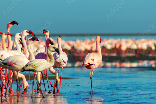 Garden Poster Flamingo african pink flamingos walking on the blue salt lake of Namibia