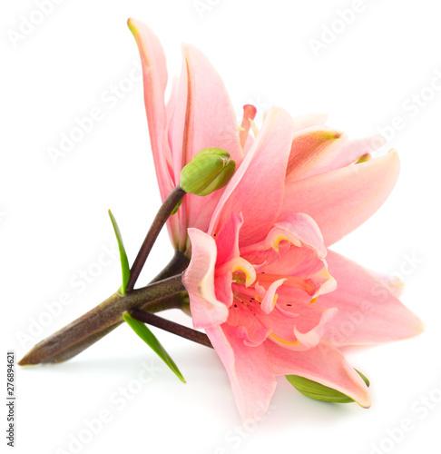 Pink lily flower. Wallpaper Mural