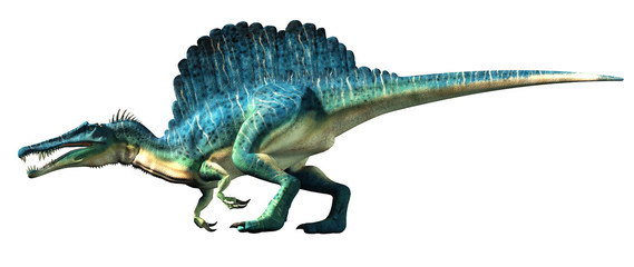 A spinosaurus on a white background. Spinosaurus was semi-aquatic dinosaur from the Cretaceous period. It was one of the largest carnivorous dinos. 3D Rendering