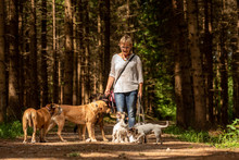 Walk With Many Dogs On A Leash. Dog Sitter With Different Dog Breeds In The Beautiful Forest
