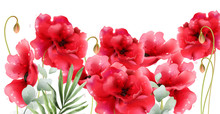 Poppy Flowers Vector Watercolor. Vintage Retro Summer Red Floral Backgrounds