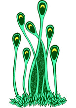Moss Graphic Drawing. Isolated...