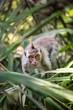 Sacred monkey Forest in Ubud,
