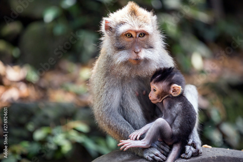 Papiers peints Singe Thoughtful monkey with a baby