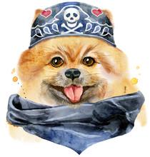 Watercolor Portrait Of Dog Pomeranian Spitz Wearing Biker Bandana