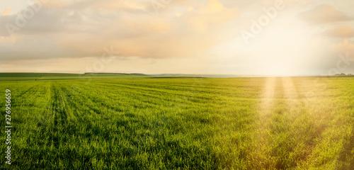 Obraz Image of green grass field and evening cloudy sunshne - fototapety do salonu