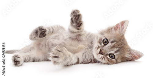 Poster de jardin Route Small gray kitten.