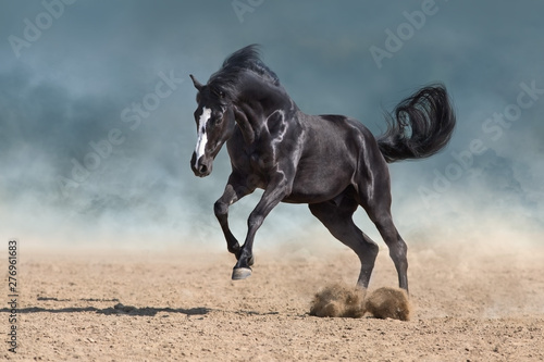 Foto op Canvas Paarden Horse free run gallop in sandy dust