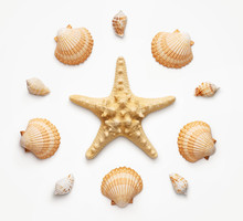 High Angle View Of Seashells A...