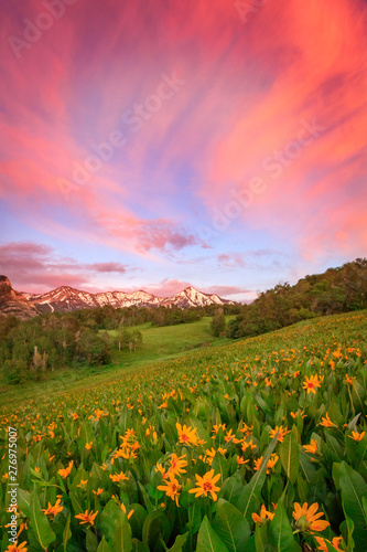Tuinposter Koraal Summer sunset with wildflowers and a rainbow in the Wasatch Mountains, Utah, USA.