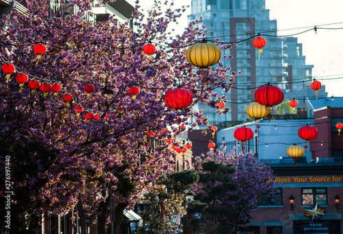 Victoria, BC, Canada Chinatown lantern decorations on a street with cherry blossom trees in full bloom.
