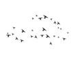 Bird Logo Template vector illustration