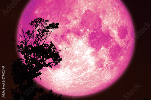 Photo super pink sturgeon moon on red night sky back silhouette trees