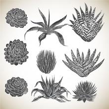 Vintage Hand Drawn Succulents Set