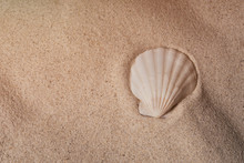 Seashell On Sand, Top View. Se...