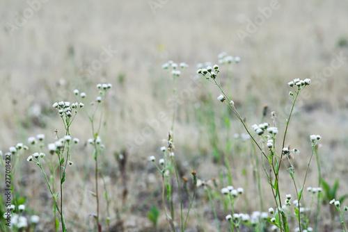 Montage in der Fensternische Darknightsky Gras Steppe mit Blumen