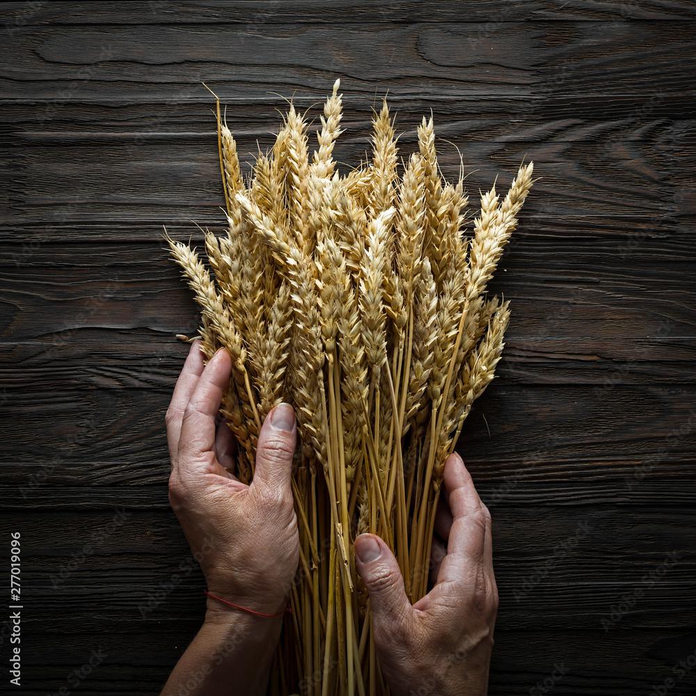 Fototapety, obrazy: Bakery Concept. Grain spikelets in female hands. Baking Breads.