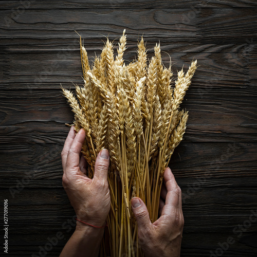 Canvas Prints Bread Bakery Concept. Grain spikelets in female hands. Baking Breads.