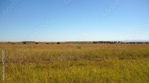 Fotografija Sun shines on flat grassland savanna landscape in Andranovory region of Madagasc