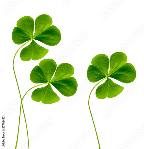Fotomural green clover leaves isolated on white background