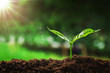 young plant growing on soil in garden with sunshine. concept save earth