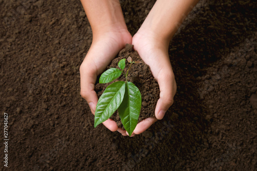 Fotografía  top view hand holding young tree on soil background for planting in garden