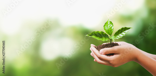 Poster Vegetal hand holding young plant on blur green nature background. concept eco earth day