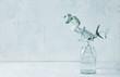 Leinwanddruck Bild - Eucalyptus branches in glass vase. Still life. Copy space