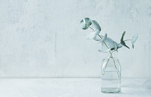 Eucalyptus Branches In Glass V...
