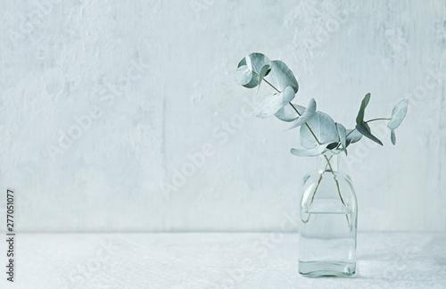 Fotografía  Eucalyptus branches in glass vase. Still life. Copy space