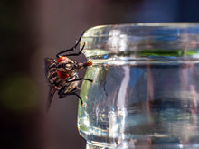 Fly Is Thirsty During Summer Time