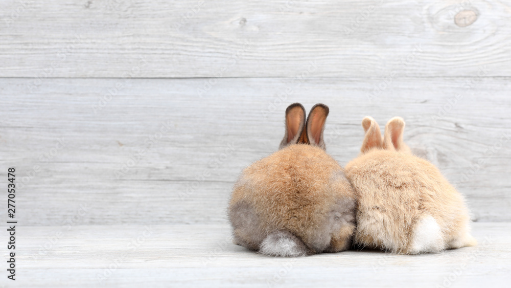 Fototapety, obrazy: Lovely bunny easter rabbit on wooden background. beautiful lovely pets.