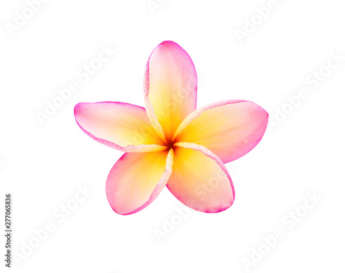 Tuinposter Frangipani frangipani flowers isolated on white background