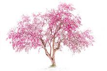 Beautiful Pink Crab Apple Tree...