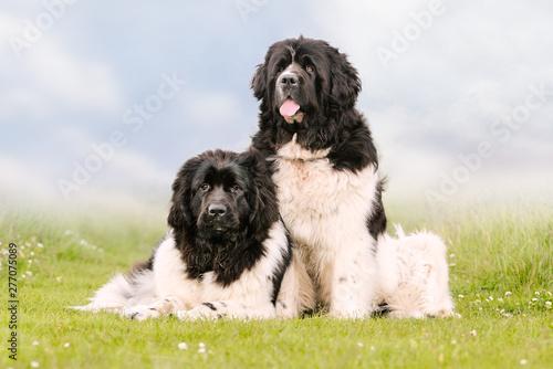 Obraz na płótnie Portrait of a beautiful dog