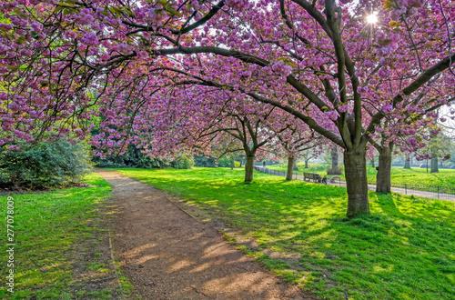 Fototapety, obrazy: Spring in Hyde Park located in Central London, UK.