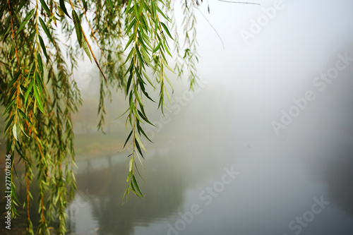 green lonely willow tree branch hangs over water of river or lake in foggy weather in autumn park Fototapet