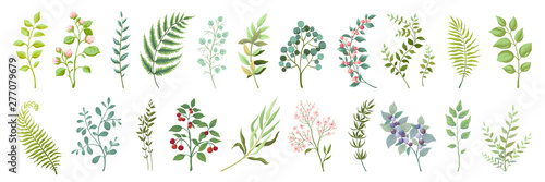 Obraz Botanic elements. Trendy wild flowers and branches, plants and leaves green collection. Vector vintage drawing watercolor greenery illustration floral bouquet - fototapety do salonu
