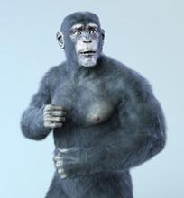 Chimp And Human Hybrid