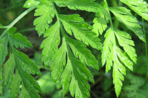 Green leaf with water drops Wallpaper Mural