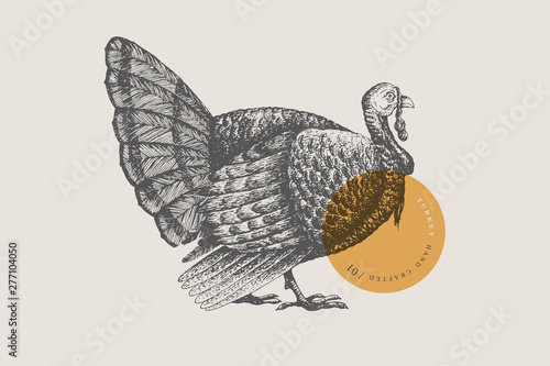 Carta da parati  Retro engraving turkey