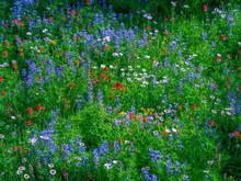 Mountain Wildflower Meadow