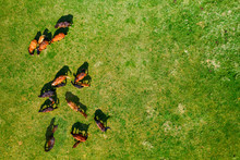 Birds Eye View Of Horses Grazi...
