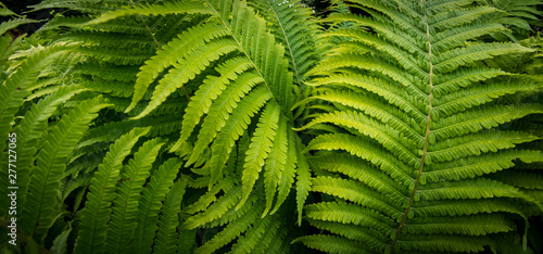 Tropical fern plant growing in botanical garden with dark light background
