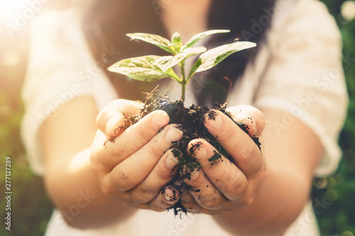 Fotomural  Young plant tree sprout in woman hand
